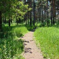 Вступаем в лес :: Александр Садовский