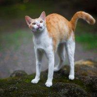 Cat story. Philippines 2013 :: Anastasia Gorshkova