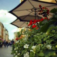 Городские цветы. :: Елена Данько