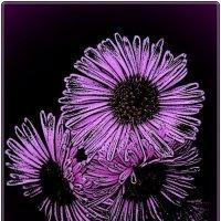 В лиловых тонах :: Нина Корешкова