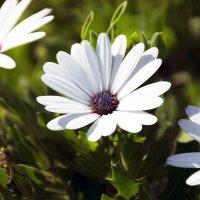 Осенние цветы 1 :: Gudret Aghayev