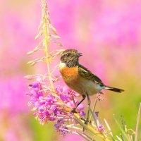 Цвет лета :: Влад