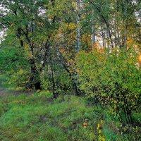 Всё холоднее сентября рассветы... :: Лесо-Вед (Баранов)