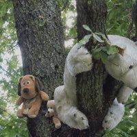 Мишки на дереве :: Евгений