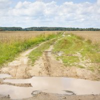 После дождя :: Татьяна Петранова