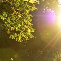 Солнце прорывается сквозь листья :: Павел Trump