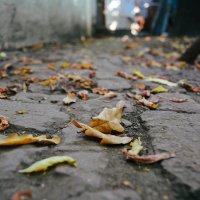 дорога усыпана листьями дуба :: Света Кондрашова