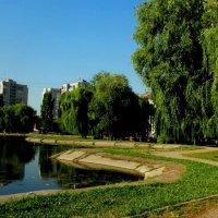 Городской парк (Бровары Киевской области) :: Наталия Каминская