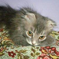 Взрослеющая кошка :: Наталия Каминская