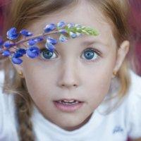 сапфировые глазки) :: Kate Vasileva