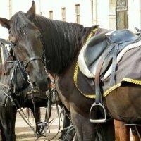 Конь вороной :: Валерия Яскович