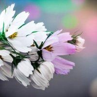 цветочки :: Марина Романова