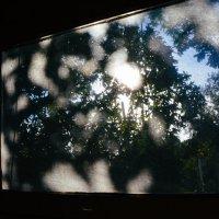 солнце пробивается в окно :: Света Кондрашова