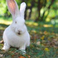 Кролик Снегурочка :: Ирина