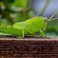 Он таки был зелёненьким... :: Дмитрий Гортинский