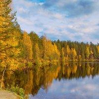 Осень на лесном озере :: Виталий