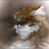 Шиншилла-2-из серии Кошки очарование мое! :: Shmual Hava Retro