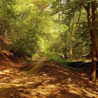 По лесной дороге :: Alexander Andronik