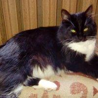 Кошка Глафира - домашняя любимица. :: Светлана Калмыкова