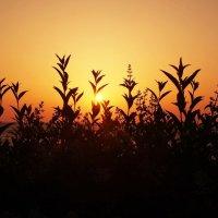 Восход в теплых тонах :: Swetlana V