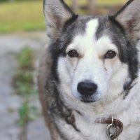 Собачья жизнь :: Ирина