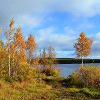 Осенние наряды :: Ольга
