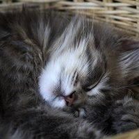Спящий комочек счастья :: Ирина Приходько