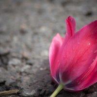 9 мая :: Олег Никитин