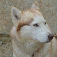 Почти волк :: Мария Букина