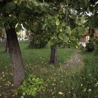 Осень наступает! :: Вячеслав