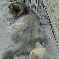 коты :: Юлия Денискина