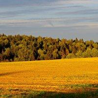 Осеннее поле. :: Ирина Нафаня