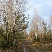 Осенний пейзаж. :: Paparazzi