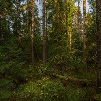 Лесной пейзаж :: Фёдор. Лашков