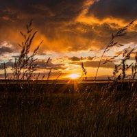 Закат на поле :: Сергей Могучёв