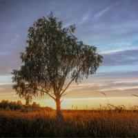 Лето на закате... :: Александр Никитинский