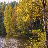 Осень на лесном озере 4 :: Виталий