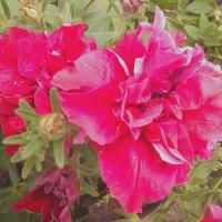 Цветы :: Елена *