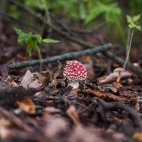 ...в лесу... :: Андрей Гр