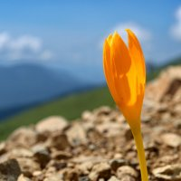На высоте 2500 м :: Алексей Меринов
