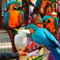 разноцветные попугаи :: Таня