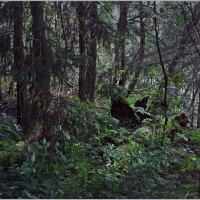 """""""А лес стоит загадочный..!"""" :: Роланд Дубровский"""