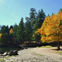 вот и наступила осень.. :: Клара