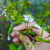 Веточка весны в прошлом :: Света Кондрашова