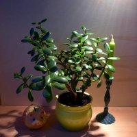 Свет, свеча, дерево, копилка... :: Nina Yudicheva