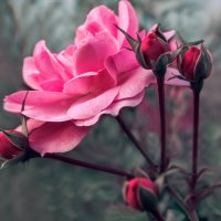 Последнее цветение перед осенью :: Наталья Мячикова