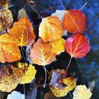 Павшая листва :: Сергей Добрыднев