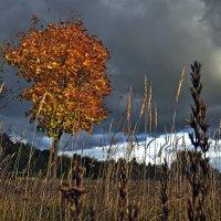 Эта осень сжигает меня до тла... :: Александр Бойко