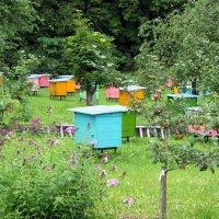 Пчельник под Горкой за крестильным храмом :: Елена Павлова (Смолова)