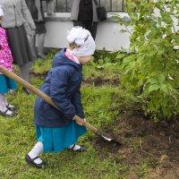 Начнем жизнь с посадки дерева!!!. :: Анатолий Бахтин
